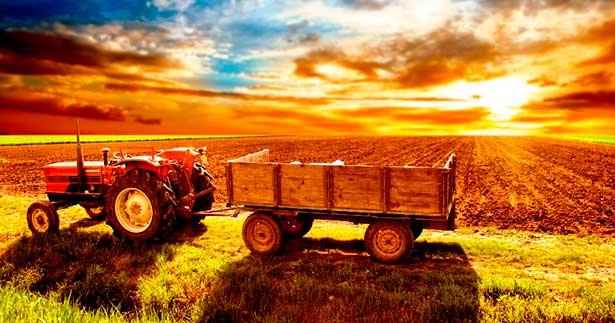 Идеи для малого бизнеса: сельское хозяйство