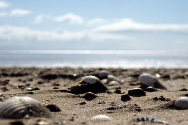 solway shells