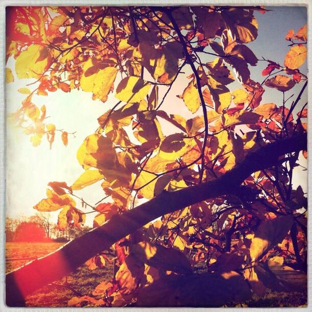Leaves in light