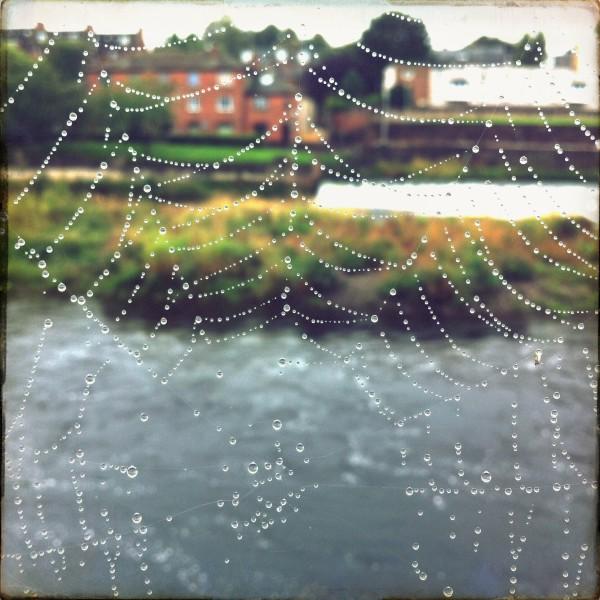 raindrops on the web