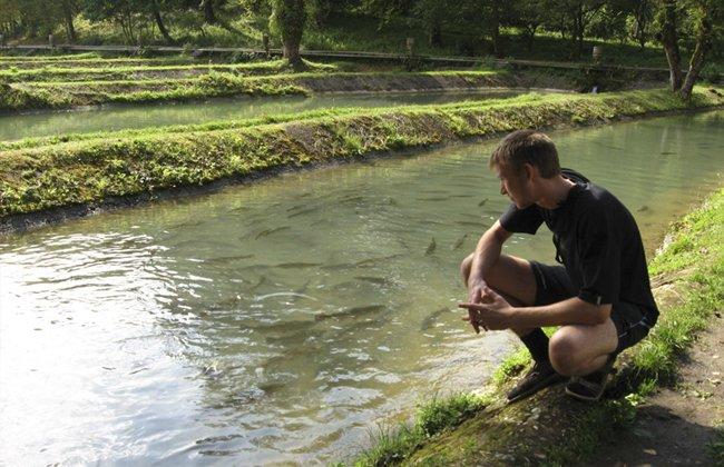 Разведение форели в искусственных водоемах