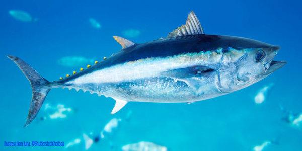 Ikan Tuna D0sgvz