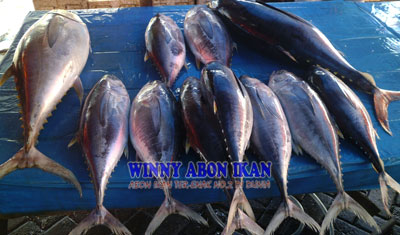 Ikan Tuna Wxiihg