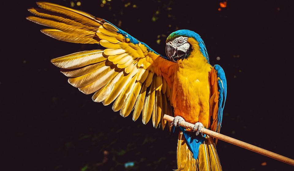 К чему снится синий попугай