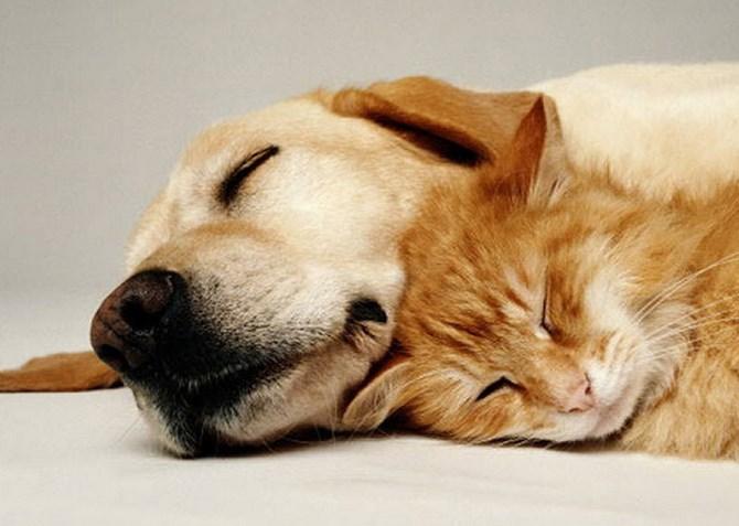 Соотношение жизни собаки и жизни человека