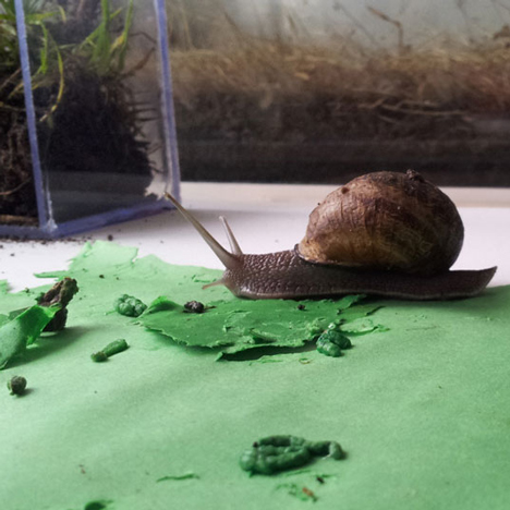 Do snails eat poop