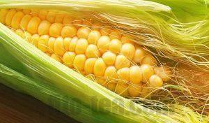 Кукурузные столбики с рыльцами для похудения