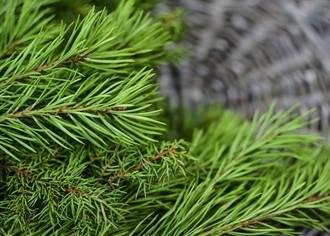 Елочный бизнес: как заработать на продаже елок