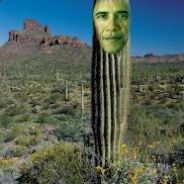 Barack obama is a cactus