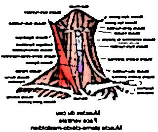os occipital 27789