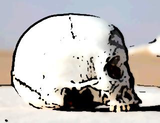 os occipital 4089