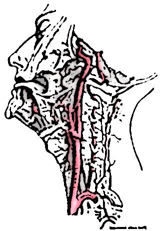 symptomes artere vertebrale 15261