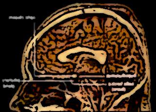 hypothalamus 10152