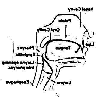 pharynx 5176