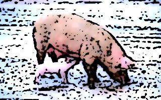 Grippe porcine 26393