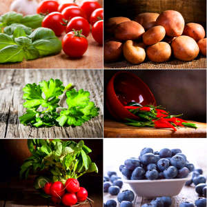 Food Lectins – Ergopathics