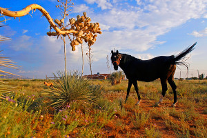 Traveling in New Mexico: A Photographic Guide - Envato Tuts+ Photo ...