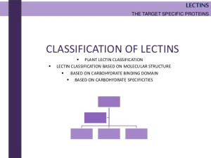Lectins - The target specific proteins. The next ...