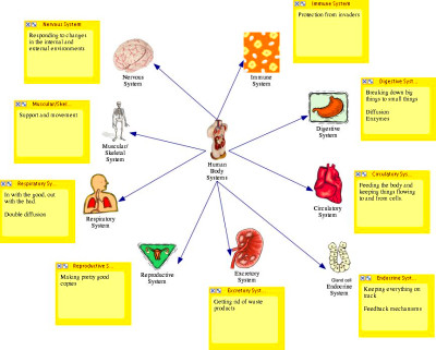 diagram of body systems | Diabetes Inc.