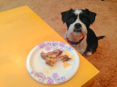 How do I get my dog to stop begging for food? - Omaha.com ...