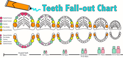 diagram and label of a tooth | Beauty And Health Solution
