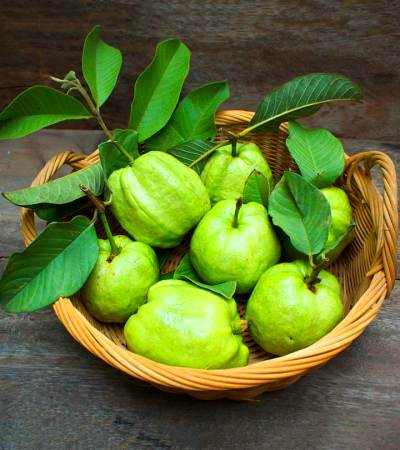 17 Best Benefits & Uses Of Guava Leaves (Amrood ke Patte) For Skin And Health