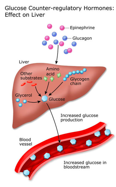 hormone are other hormones that help maintain blood sugar levels ...