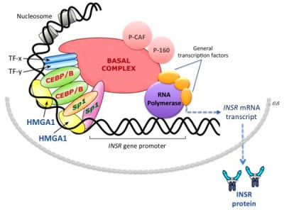 on the contribution of genetics to the pathogenesis of type 2 diabetes ...
