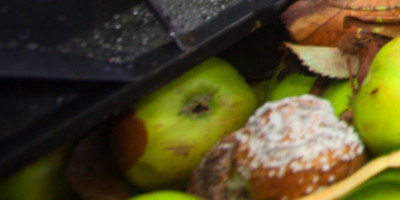 The True Cost of Food Waste   HuffPost
