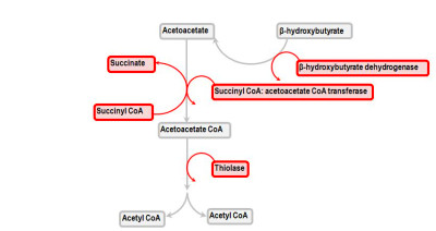 ... the generation and the metabolization of the ketone bodies) see here