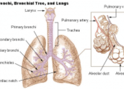 Chronic obstructive pulmonary disease: Wikis