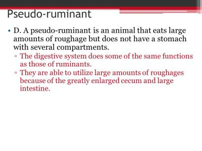 Pseudo-ruminant D. A pseudo-ruminant is an animal that eats large ...