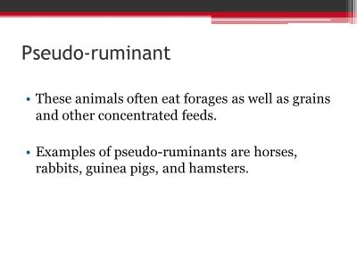 Pseudo-ruminant These animals often eat forages as well as grains and ...