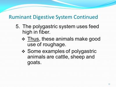 Ruminant Digestive System Continued 5.The polygastric system uses feed ...