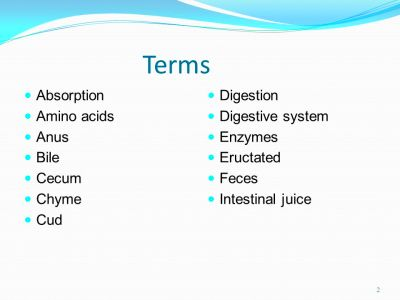 ... Cud Digestion Digestive system Enzymes Eructated Feces. - ppt download