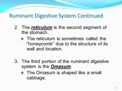 Ruminant Digestive System Continued 8 2.The reticulum is the second ...