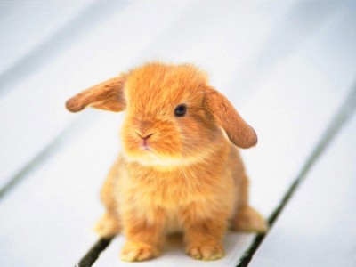 Baby Bunnies images baby bunnies HD wallpaper and ...