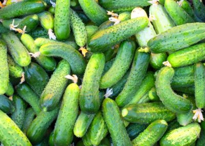 Freshly harvested cucumbers for sale at a market. Photo Credit Gorvik ...