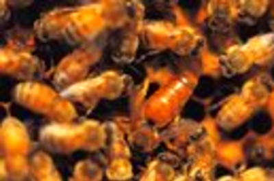 Royal Jelly Benefits & Side Effects | LIVESTRONG.COM