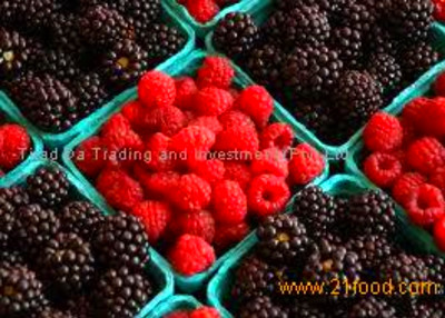 Fresh Berries products,South Africa Fresh Berries supplier