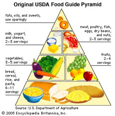 new usda food pyramid | Beauty And Health Solution
