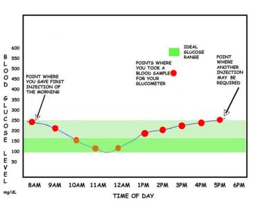 Canine Blood Glucose Curve | My diabetic dog | Pinterest