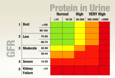 Normal Protein Levels In Urine | Protein in Urine | Pinterest