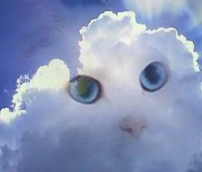 one day a cat dies of natural causes and goes