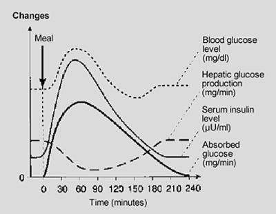 Blood Glucose Level After Meal