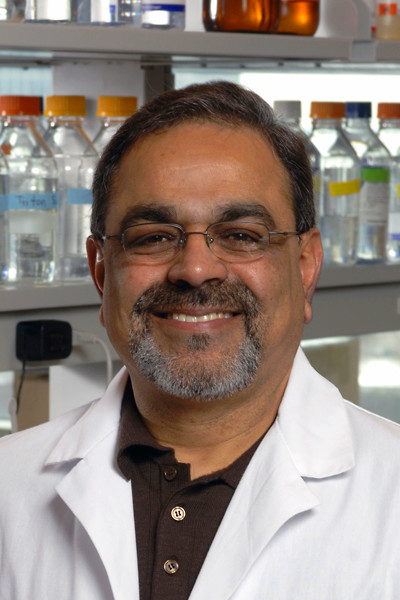... function of a single gene linked to diabetes in mice   UIC News Center