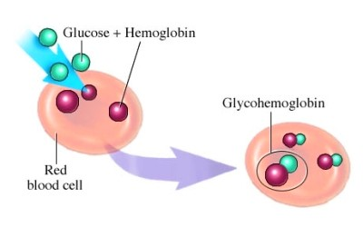 Hemoglobin A, Glycosylated; Glycohemoglobin A; Glycosylated Hemoglobin ...