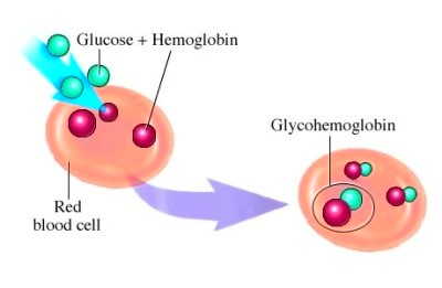Glycohemoglobin Normal Range | The Diabetes Destroyed
