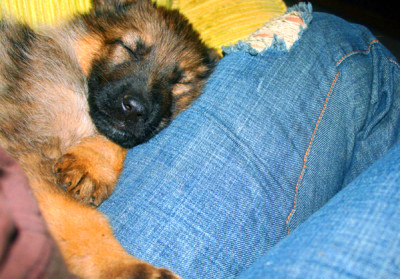 Pet Therapy For Diabetes: How Your Dog Or Cat Can Help You ...