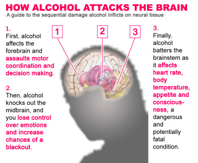 The Effects of Alcohol on the Brain